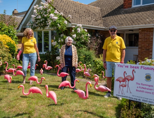 Lions Bring Flamingos Flocking to Bexhill