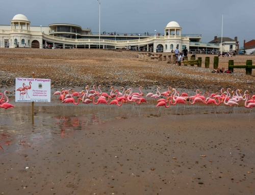 Flamingos Seen on Bexhill Beach